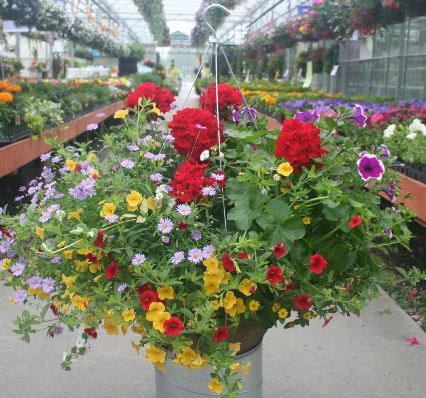 Hanging Flower Baskets In Full Sun : Hanging basket full sun flowers