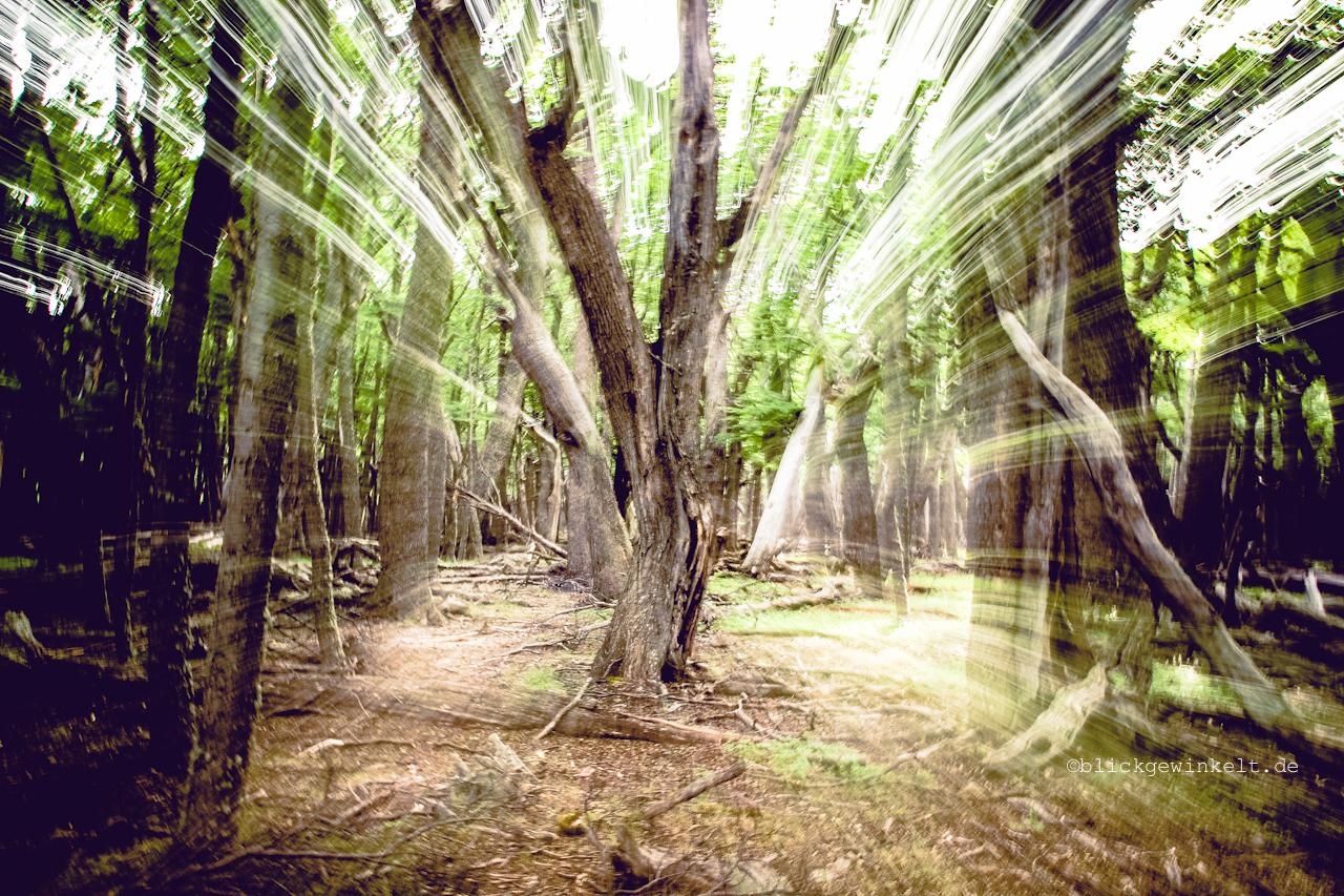 Objektivbewegung während der Aufnahme eines Baumes