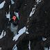 Duas bases subterrâneas encontradas na Antártida; o que elas são?