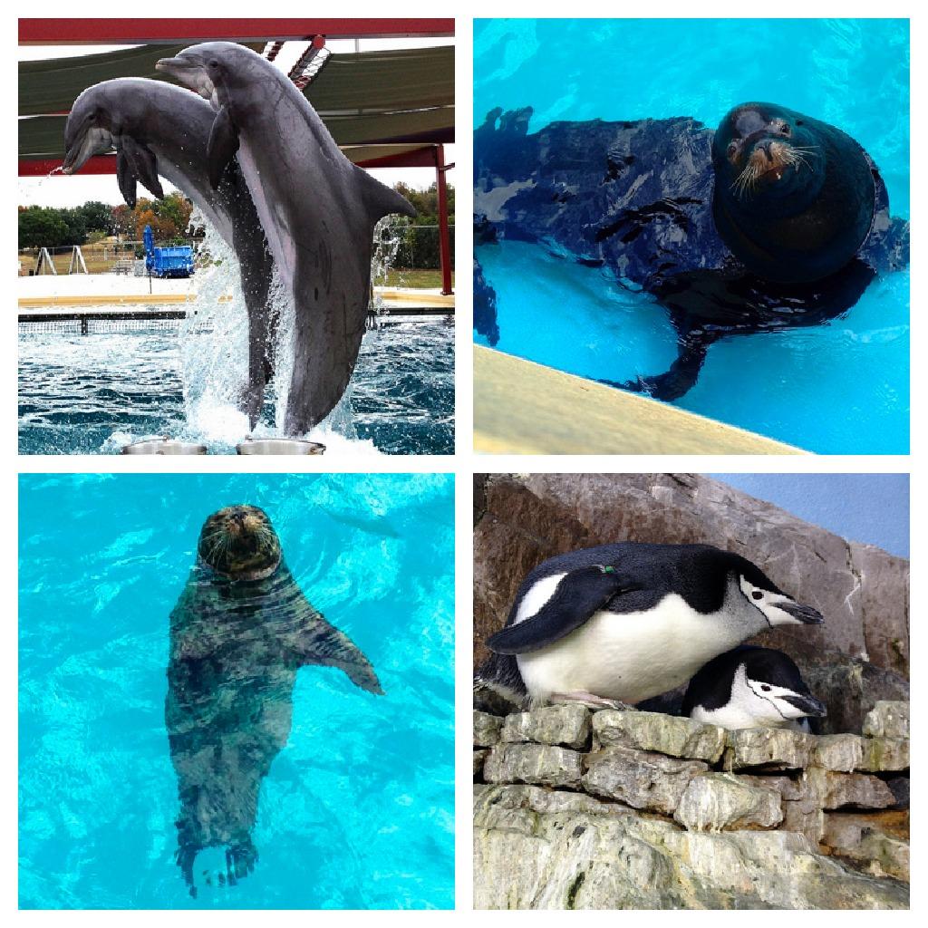 http://3.bp.blogspot.com/-e19w5yzq0ss/UMaYuBu-j7I/AAAAAAAAQkE/SRPKT0s3VGo/s1600/SeaWorld+animals.jpg