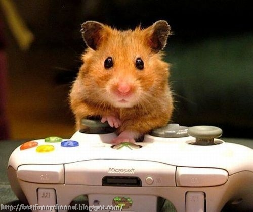Hamster gamer.