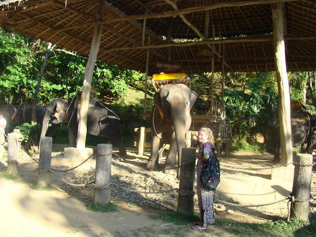 Слоновья ферма на Пхукете.