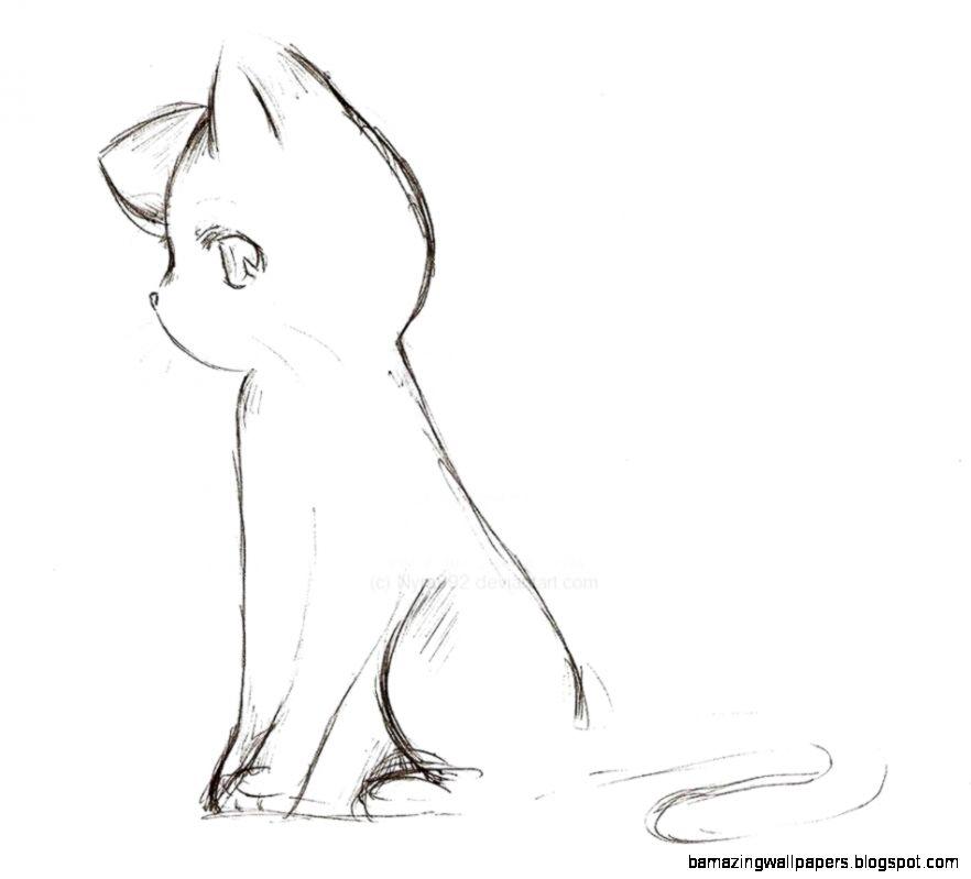 Anime Cat Sketch By Nyra992 On DeviantART  CatBreedsPic