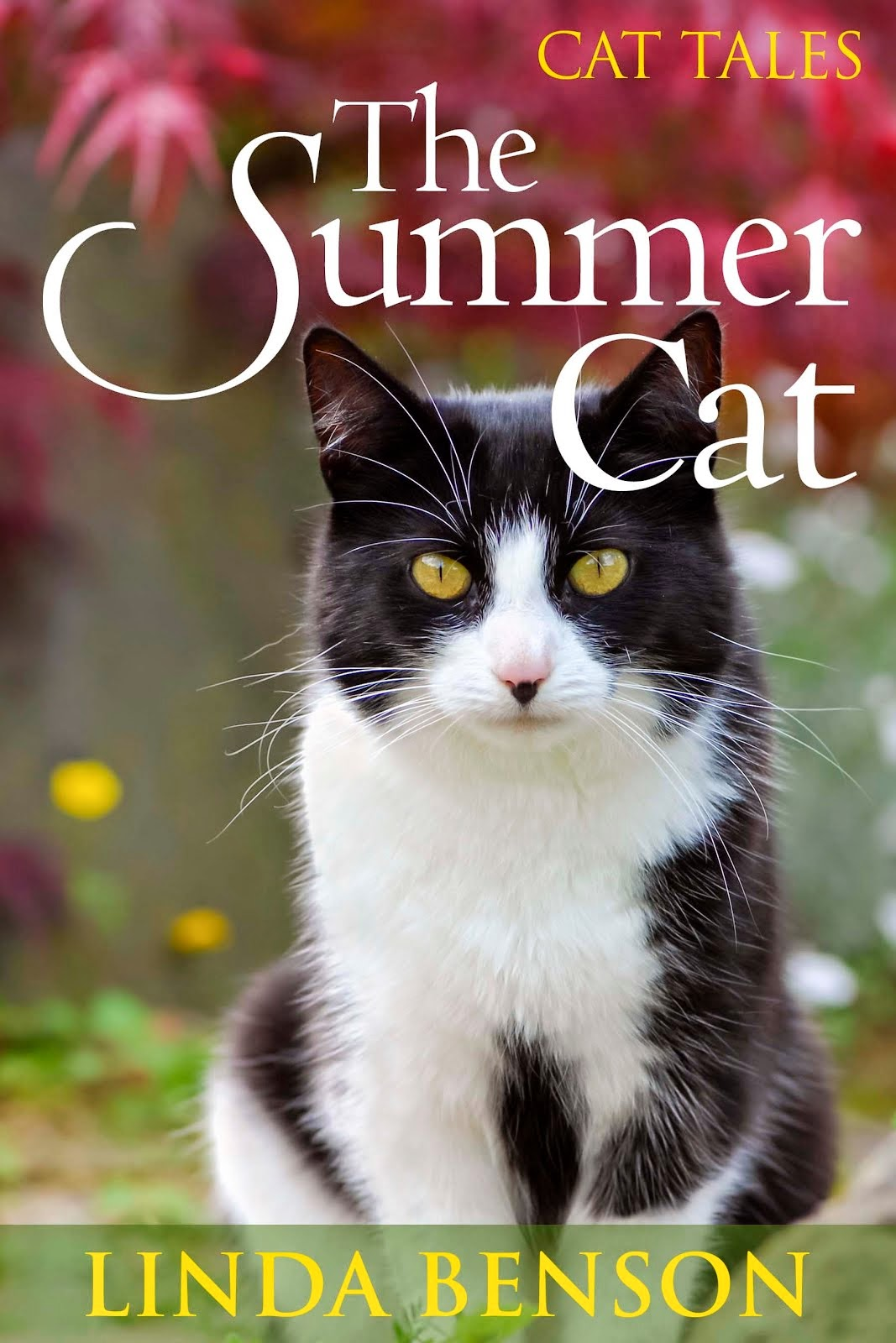 New Release - The Summer Cat - only $0.99