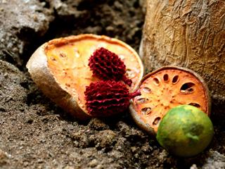 fotos alimentos imagenes variadas