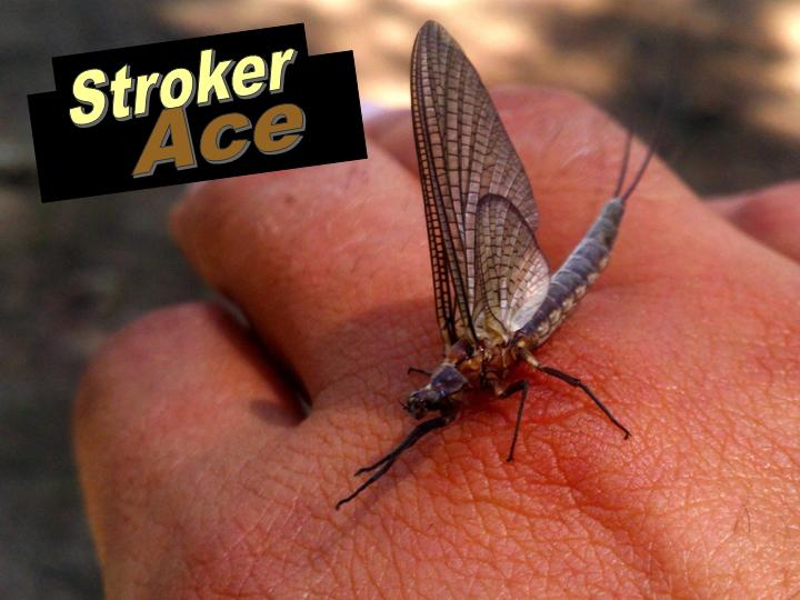 Stroker Ace Fly Fishing- Indiana