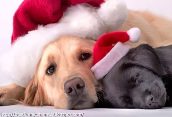 Christmas puppies.