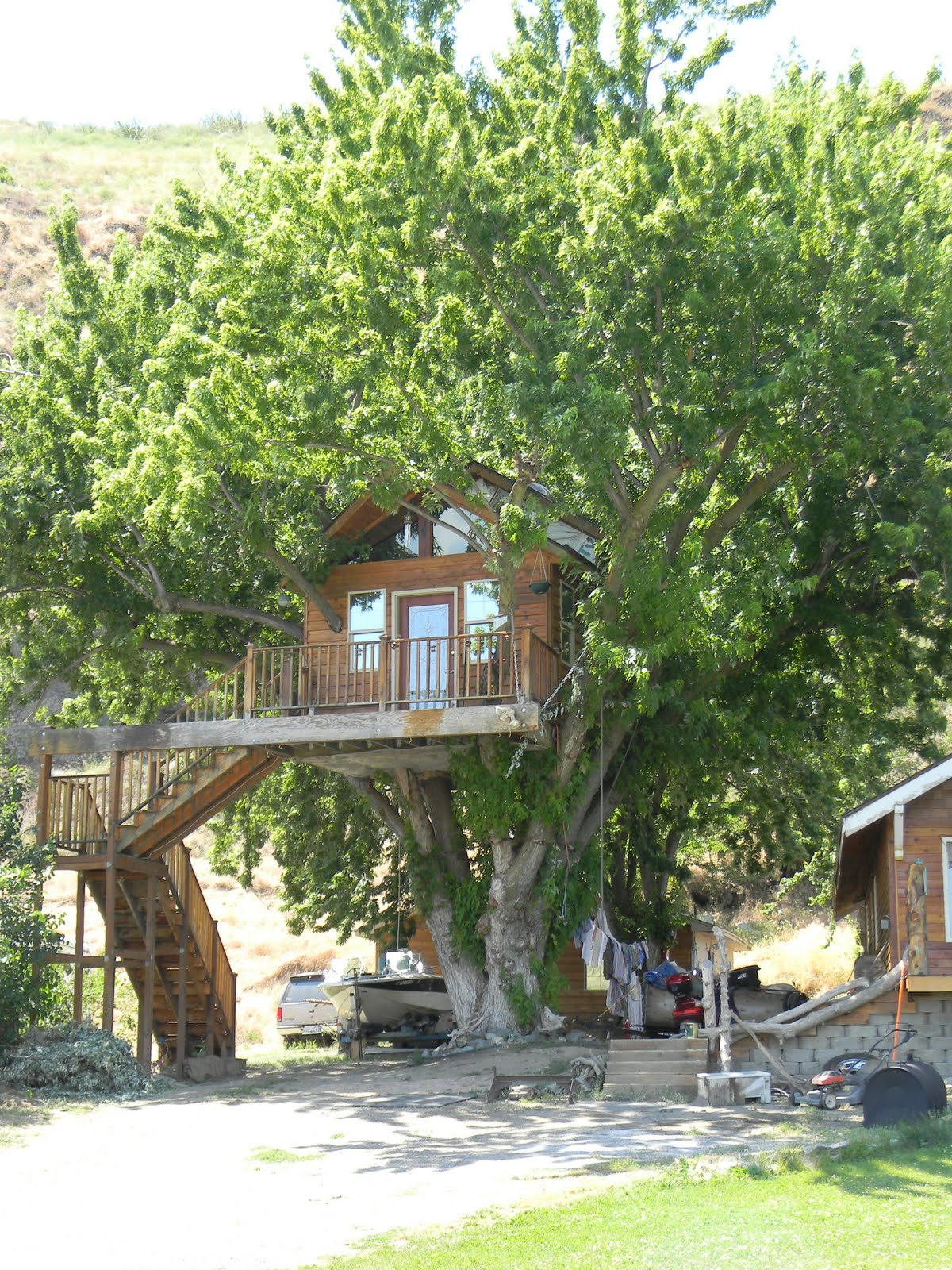 Amazing tree house wallpapers for Tree wallpaper for home