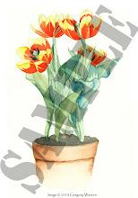 <i>Tulips</i>