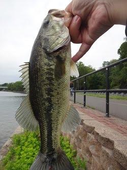 Photo of my Latest Catch: