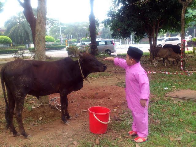 Korban seekor lembu