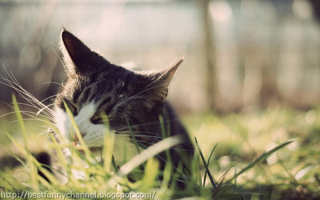 Nice cat in the grass.