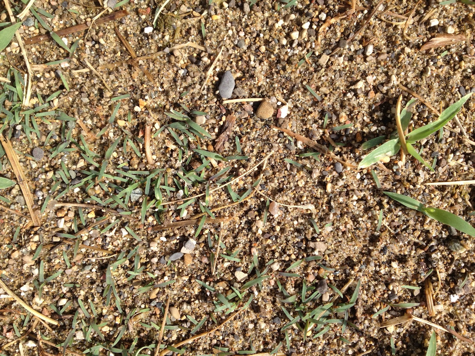 how to grow thick grass from seed