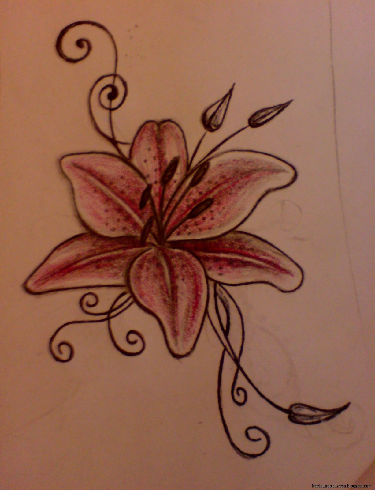 Lily tatoo free tattoo pictures lily tattoo designs tattoo meaning izmirmasajfo
