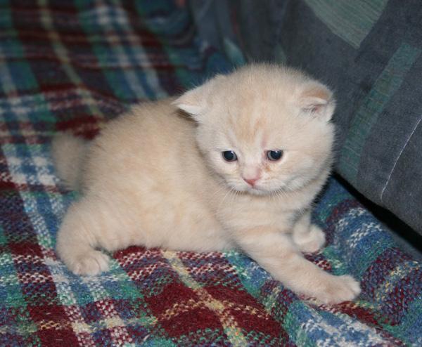 L 39 empire du chat lundi 14 f vrier 2011 - Couper les griffes d un chaton de 2 mois ...