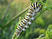 Caterpillar Picture and Photo 24