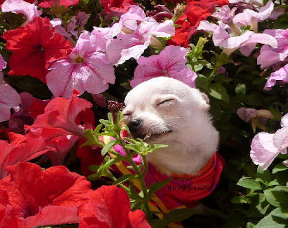 Eye on the Edge: Stopping to smell the flowers