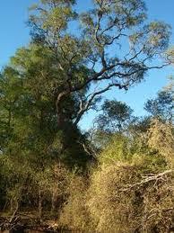 bosque chaqueño