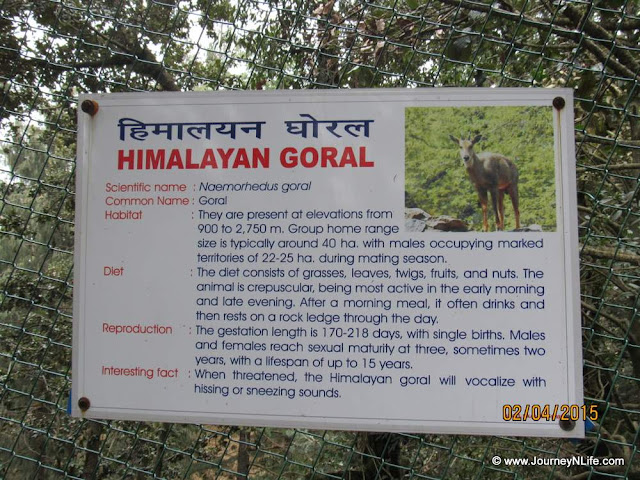 Himalayan Wildlife Zoo in Kufri, Himachal Pradesh India