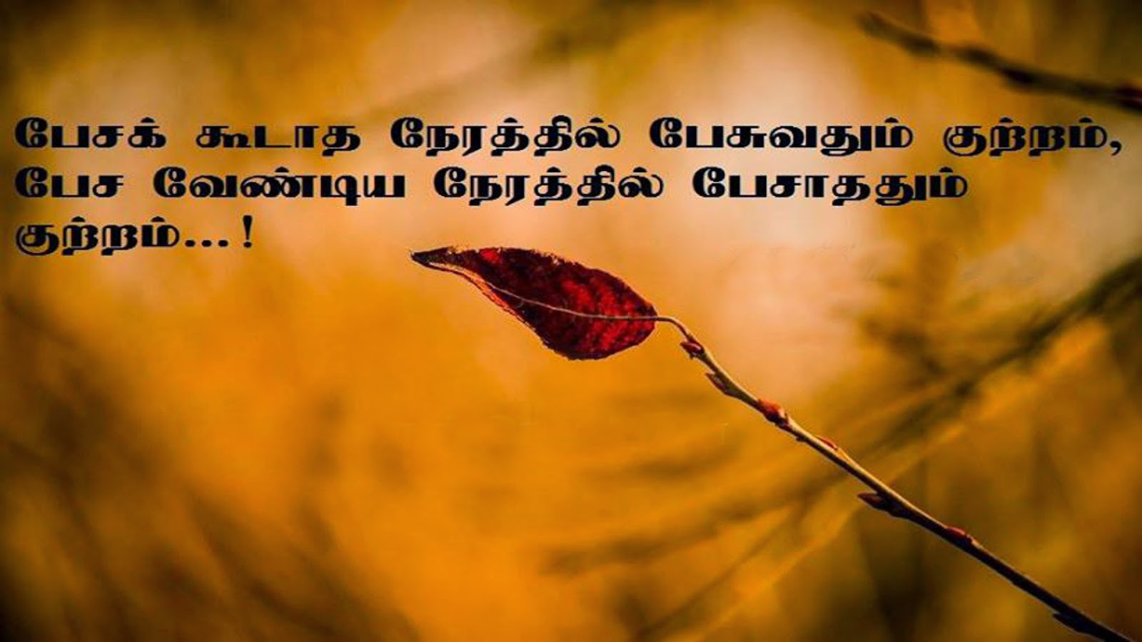 Image of: Wife Nice Quotes Nice Quotes Wisdom Thoughts tamil