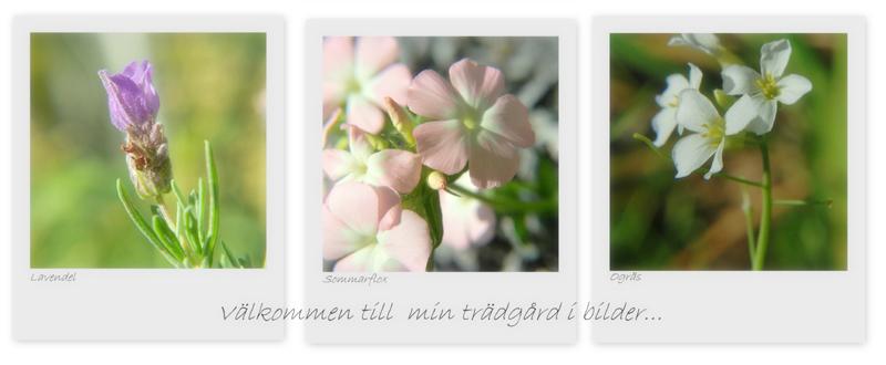 Inas Lilla Trädgård