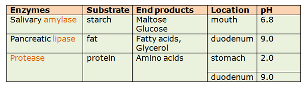 biology enzymes g c s e Solutions to practice problems for biochemistry, session 5: c) an enzyme may alter some or all of the following parameters 701sc fundamentals of biology.