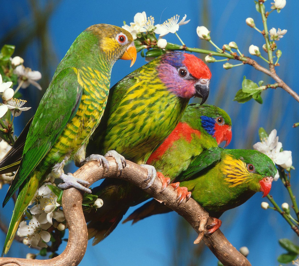 Mp3 Download Free Forever: flowers for flower lovers.: Beautiful ... for Beautiful Pictures Of Birds And Flowers  111ane