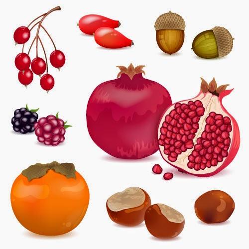 Frutos mediterráneos y silvestres - vector
