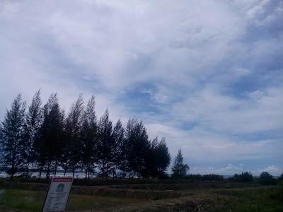 Pohon Natal yang berada di Pantai Aceh