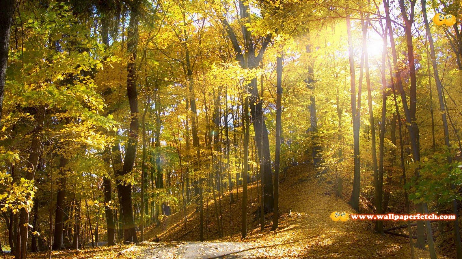 http://3.bp.blogspot.com/-e5l742fQ-r4/TwCRNVo_5MI/AAAAAAAAG80/bg8Mgu3-6uM/s1600/SuperPack_Beautiful_Nature_HD_Wallpapers_Part_83.131.jpg