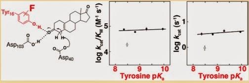 ketosteroid isomerase fusion