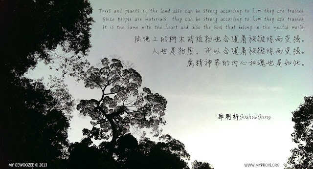 郑明析, Joshua Jung, Tree, Providence, Proverb, Religion, faith, Plant, Train