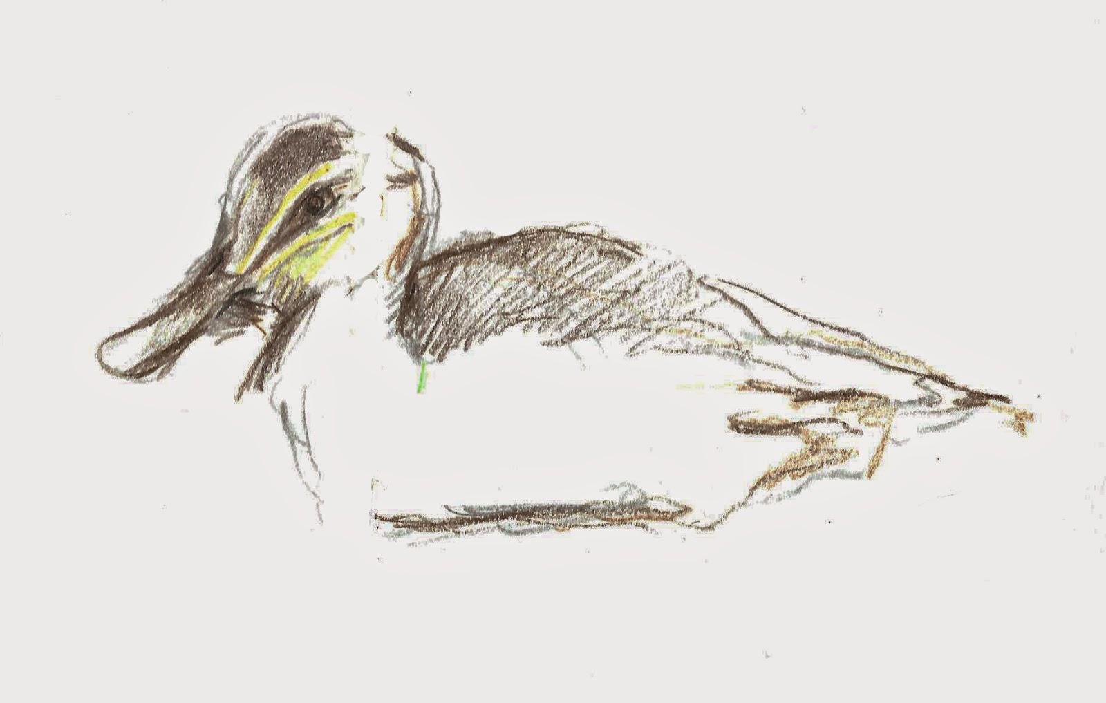 Duck head drawing
