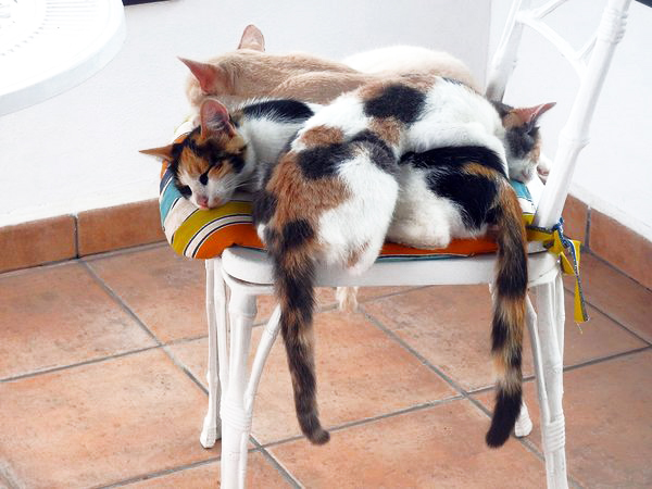 multi-colored cats happiness
