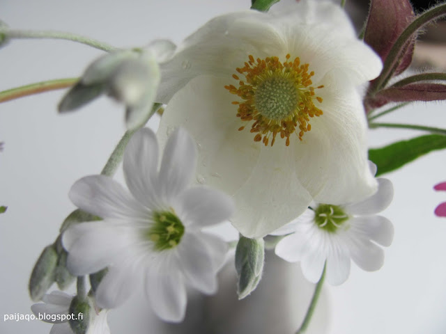 blogisitarina: kukat maljakossa