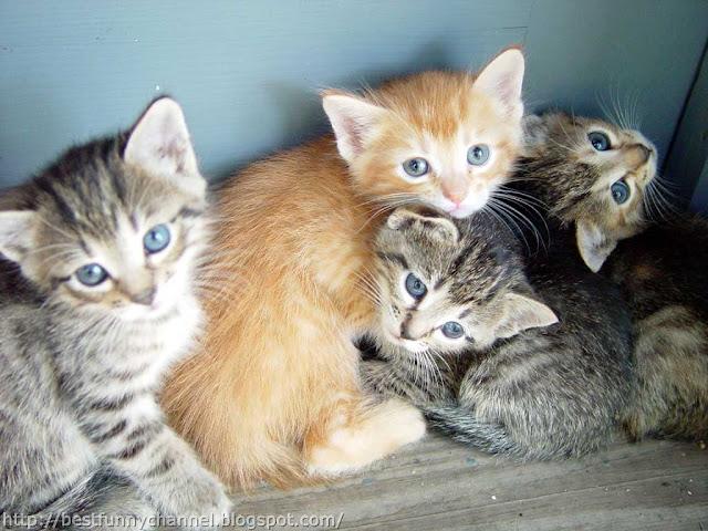 Very nice kittens.