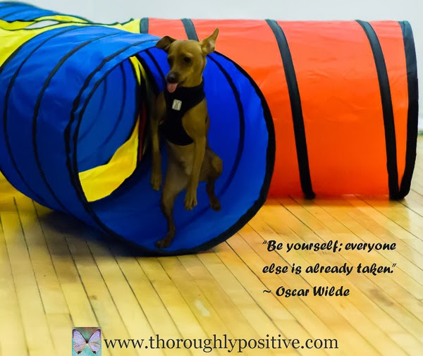 """Be yourself; everyone else is already taken."" ~ Oscar Wilde picture of a dog in agility standing on one leg with tongue sticking out."