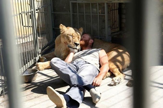 Life With Lions