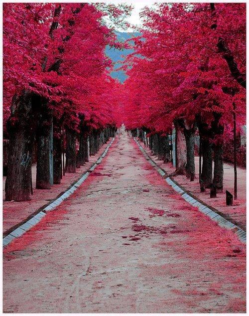 شارع جميل - شارع رومانسي - شارع الحب