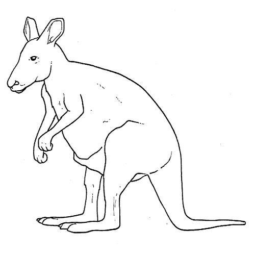 Dibujo de animales OMNIVOROS para pintar - Imagui