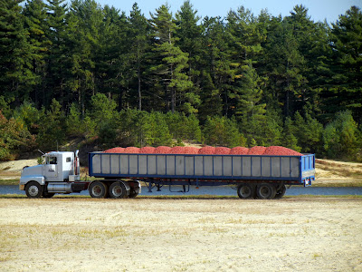 A truck full of freshly harvested cranberries