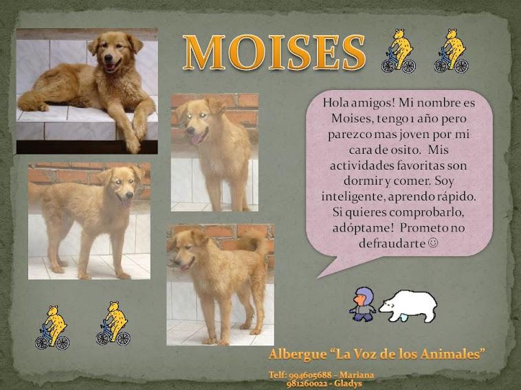 Perritos en adopción.