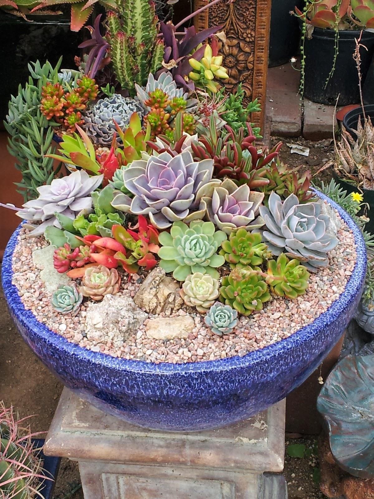 Studio Garden Bungalow Its Cactus Time California
