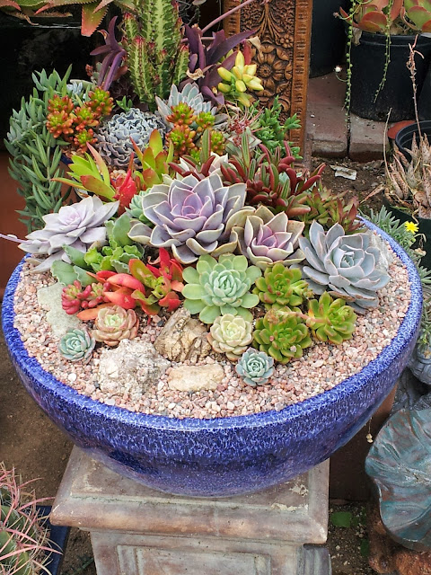 Succulents in a large blue glazed bowl, garden accent at the California Cactus Center