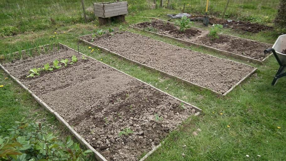 Le printemps du potager nouveaux aturins for Semer du gazon au printemps