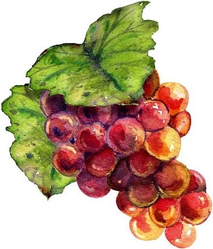 dibujos coloreados racimos de uvas - Imagenes y dibujos para imprimir