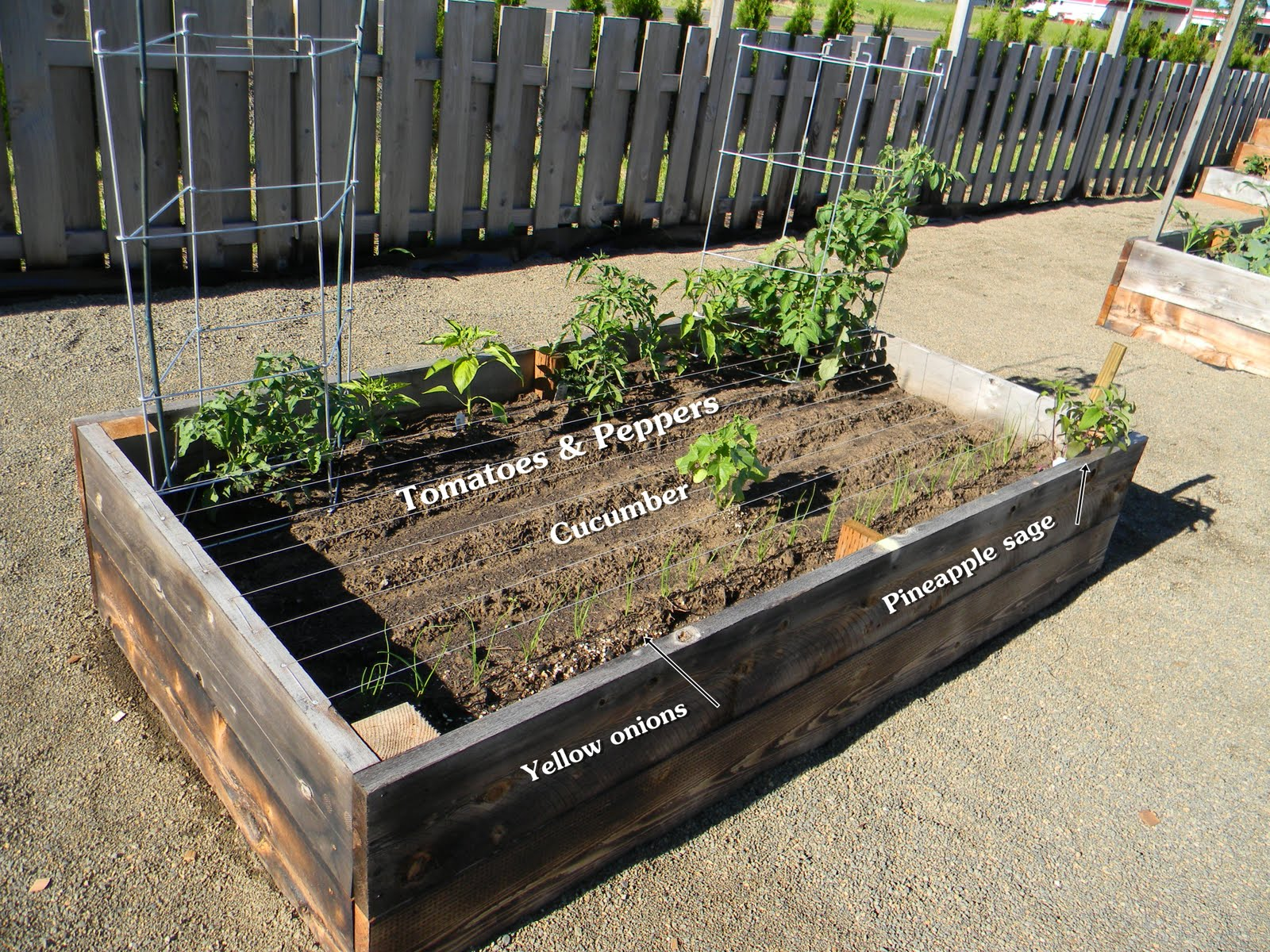 Natural practical remedies how our community garden grows - Practical tips for gardening in june ...