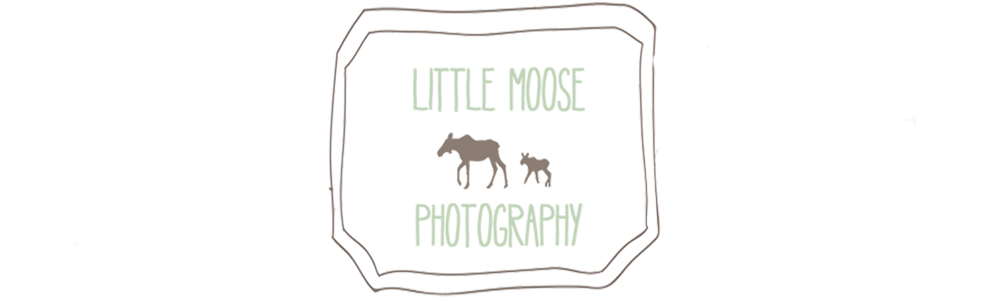 Little Moose Photography