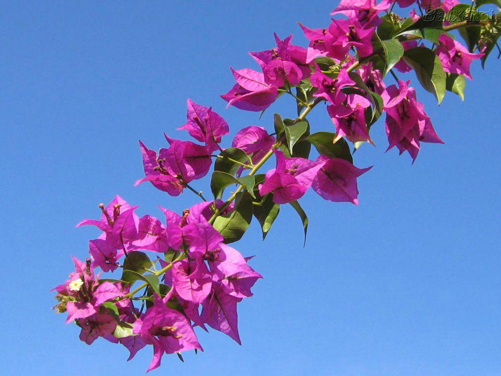 Escola flausina de assun o marinho primavera - Plantas de temporada primavera ...