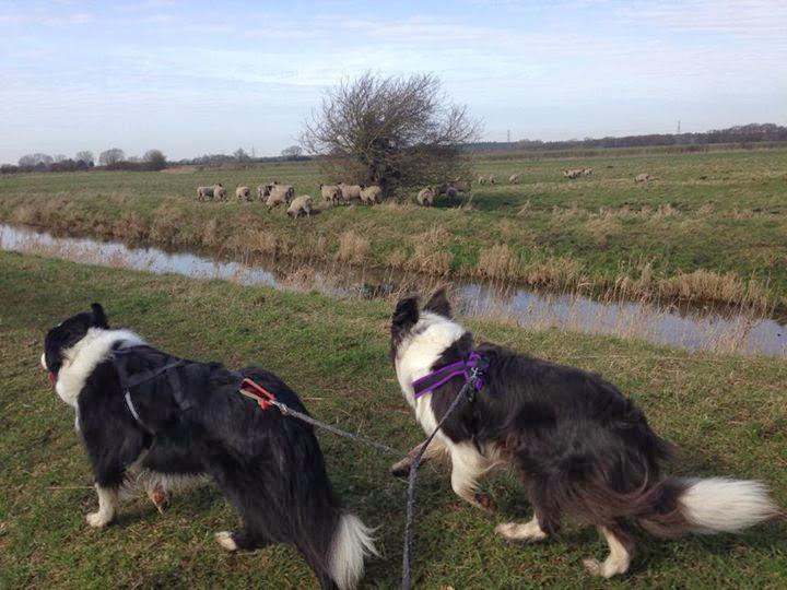 Peddars Dog Training